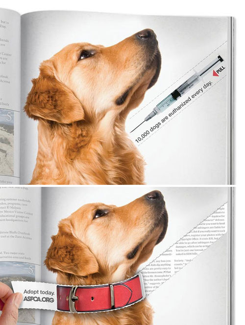 magazine article content at following pets