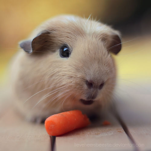 I_love_carrots_by_lieveheersbeestje-d4yt7wl_large