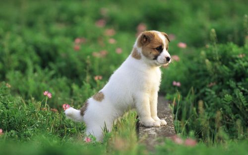 Garden adventure of the little puppy photos pictures puppy MIL56005 large Ang mga resulta ng Google para sa http://www.wallcoo.net/animal/mx069 pretty puppies puppy garden adventure/wallpapers/1680x1050/Garden adventure of the little puppy photos pictures puppy MIL56005.jpg