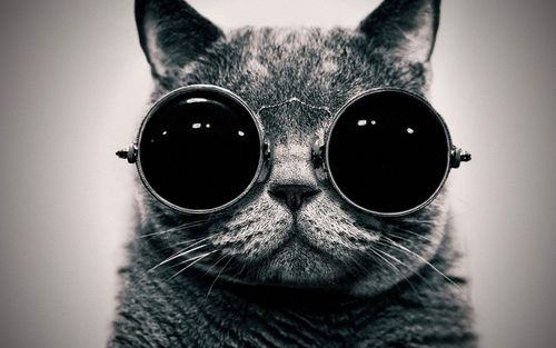 cool cat black and white sunglasses e1328795652733 large Cats Are Obviously Better Than Dogs cool cat black and white sunglasses – GigaFytes.com