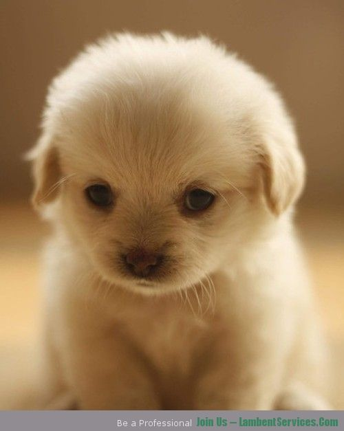 What-a-sweet-little-face2_large