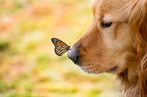 http://data.whicdn.com/images/28447595/butterfly-cute-dog-dogs-Favim.com-424180_large.jpg