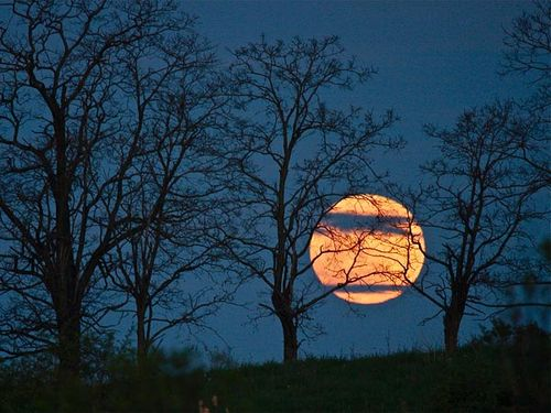 Space195-super-moon-trees-lunar-perigee_53104_600x450_large