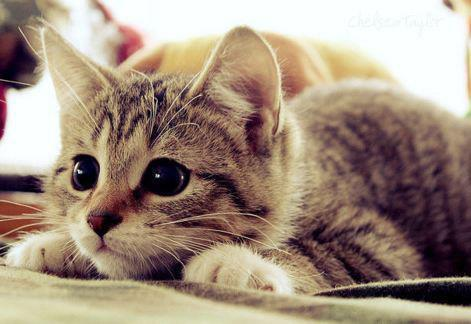 Big-eyes-cat-cute-eyes-green-eyes-favim.com-424582_large