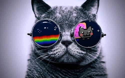 beautiful, cat, cool, cute - inspiring picture on Favim.com