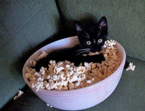 cute, innocent, kitten, lol, popcorn - inspiring picture on Favim.com