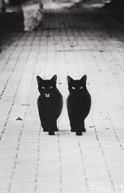 Black-cats-4jpnrb9ip-340545-415-647_large