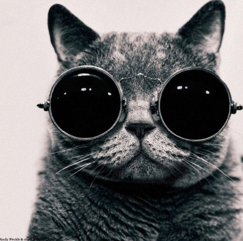 Kittens_black_and_white_cat_glasses_smile_junk-d7ac4206835957a720729e6fb1068fa4_h_large