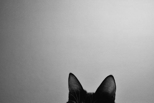 Black-and-white-cat-photography-vintage-favim.com-429629_large