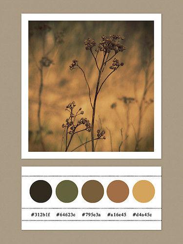 Art_colour_brown_climate_colors_equinox-65b8671704b97b2e7ac066a0277610dc_h_large