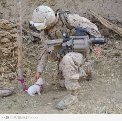 4213535 700b large 9GAG   A solider petting an adorable puppy