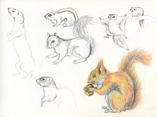 squirrels 252Bsketches large The Inspirationbook   Miriam van Klinken   Picasa Web Albums