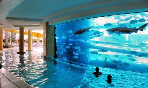 Funny-cool-pool-aquarium-sharks_large