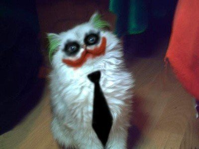 cat dark knight fun funny joker Favim.com 434586 large cat, dark knight, fun, funny, joker   inspiring picture on Favim.com