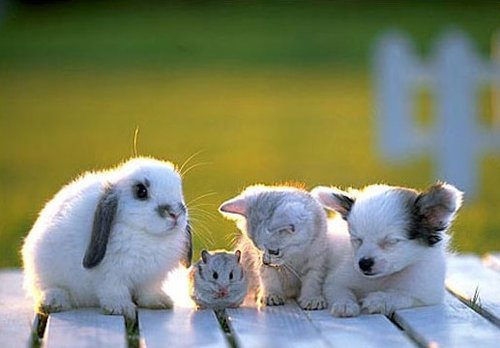 Adorable-aww-bunny-cat-cute-favim.com-432301_large