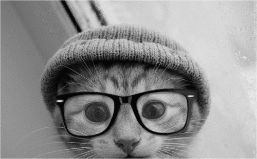 osećaj u slici,tonu,stihu... - Page 4 Cat-cute-glasses-hat-kitten-Favim.com-435174_large