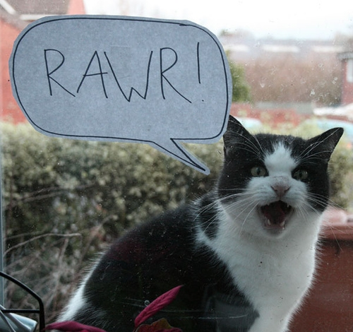 20090114121655 large bert rawr on Flickr   Photo Sharing!