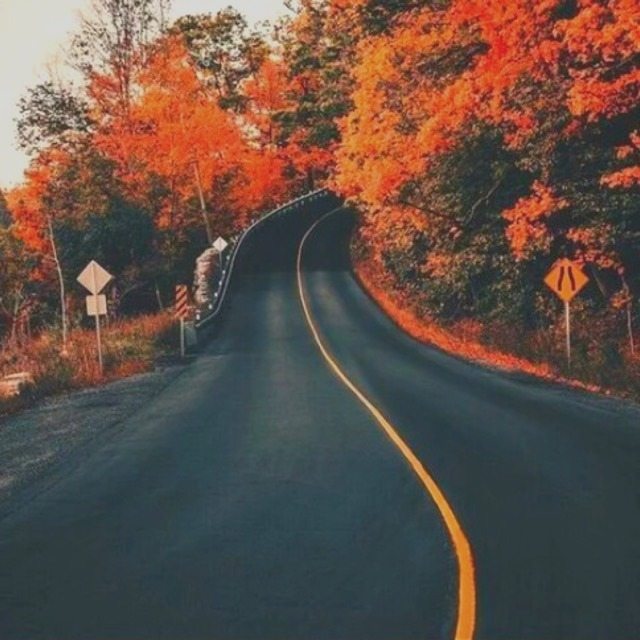about me, autumn, and landscape image
