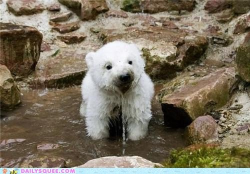 Cute-animals-i-has-a-wet1_large