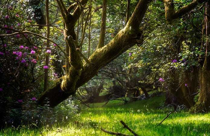 article, trees, and nature image