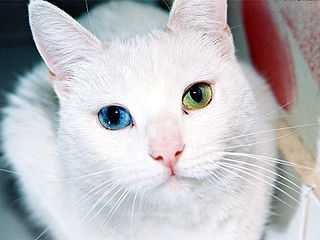 320px-cat_eyes_large