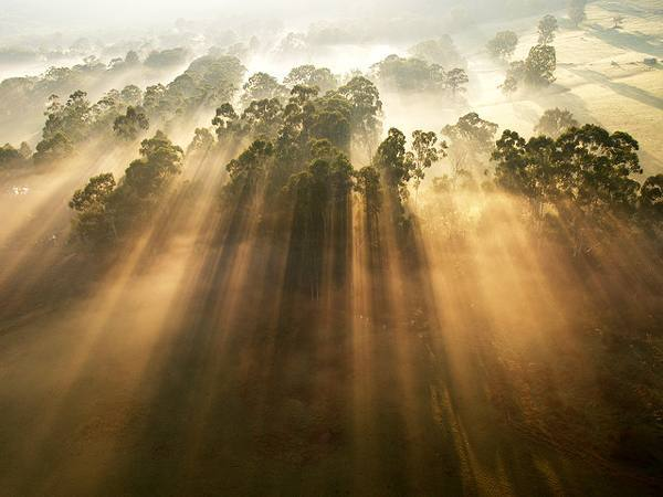 tree, sun, and forest image