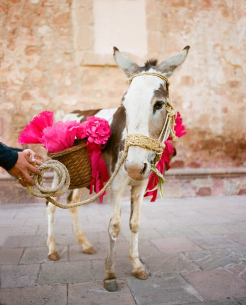 burro hot pink wedding flowers 21 large Monday's Mix: Fiesta | Love You, Mean It