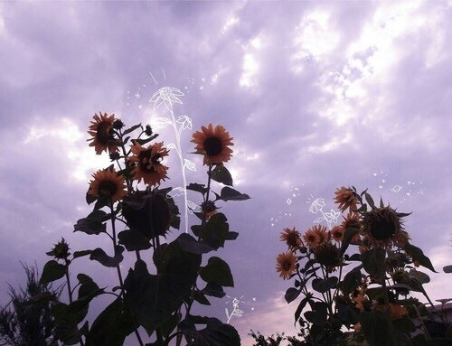 flowers, sky, and purple image