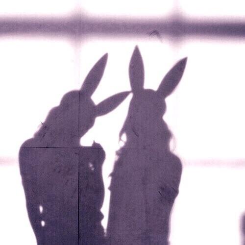 bunny, shadow, and tumblr image