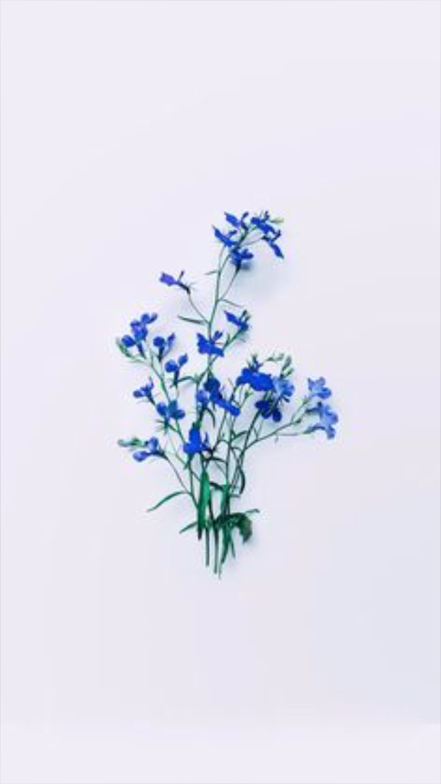 flowers, blue, and wallpaper image
