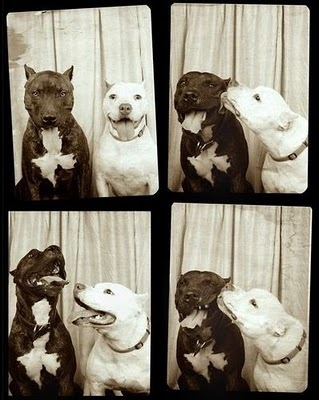 Dogs_in_a_photo_booth_large