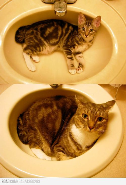 4360293 700b large 9GAG   The sink is getting full...