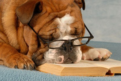 4116493-english-bulldog-wearing-eyeglasses-sleeping-over-a-good-novel_large