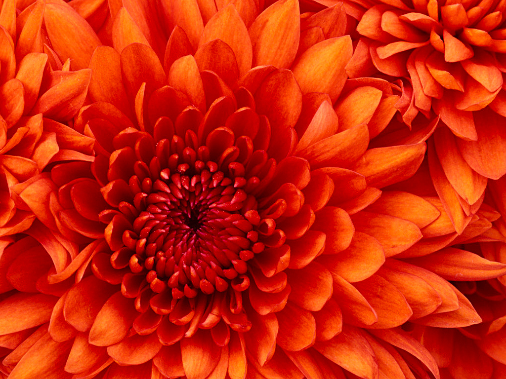 flowers, article, and orange image