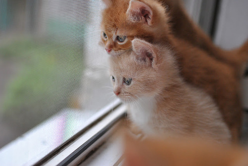 cute kittens 20 great pictures 12 large Cute kittens (20 great pictures) | Kitty Bloger