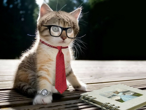 Cats wearing glasses. Cats with glasses. Glasses on cats ...