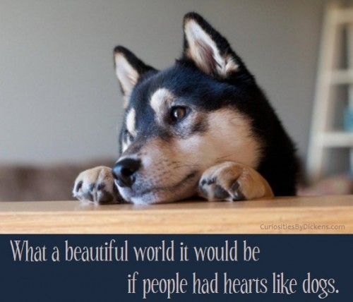 If-people-had-hearts-like-dogs-500x428_large