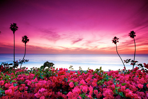 Beach_beautiful_nature_pink-13afc0c515862e059fcdbd8aff67b732_h_large