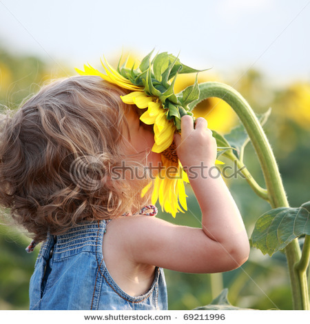 Stock-photo-cute-child-with-sunflower-in-summer-field-69211996_large