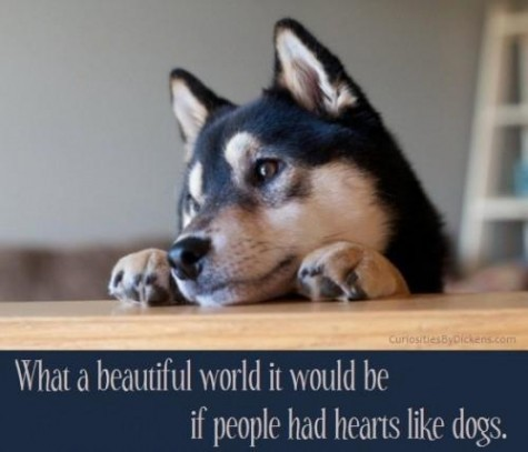 What-a-beautiful-world-it-would-be-if-people-had-hearts-like-dogs-378659-475-407_large