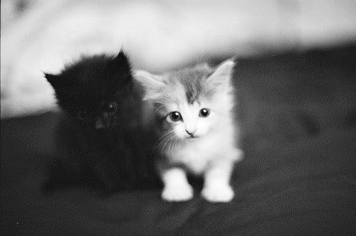 Amazing-bampw-beautiful-black-and-white-cat-favim.com-446091_large