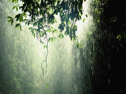 Rain_forest_tropic_large