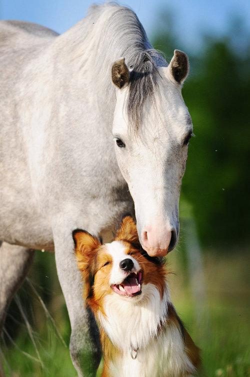 Best_friends_ever_by_vikarus-d51idm8_large