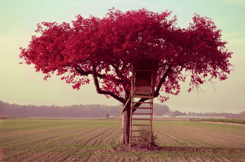 Colour_field_pastel_photograpy_tree_treehouse-525d0627f030a780f888d7bd52ed314f_h_large