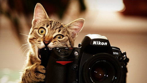 Cute-kitten-nikon-ps-vita-wallpaper_large