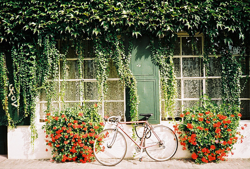 Bicycle-bike-floral-flowers-green-favim.com-447182_large