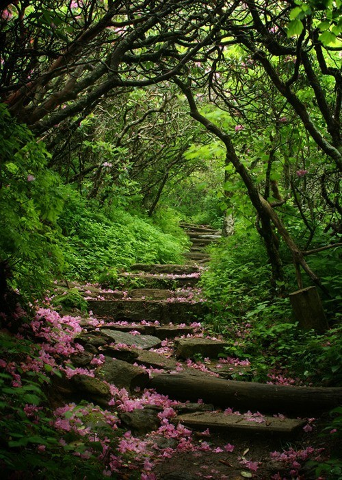 Oh, The Places I'll Go... someday. / Craggy Gardens, Blue Ridge Parkway, North Carolina