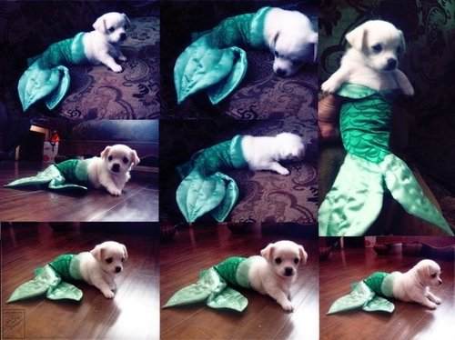 Puppy_mermaid_large