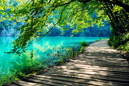 Beautiful-amazing-nature-tree-water-lake-green-color-photo-photography-favim.com-461737_large