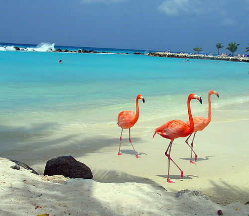 Aruba_beach_caribbean_chris_of_the_world_flamingos_island-c756c2f59a76d82fbc6de34a20716e7d_h_large